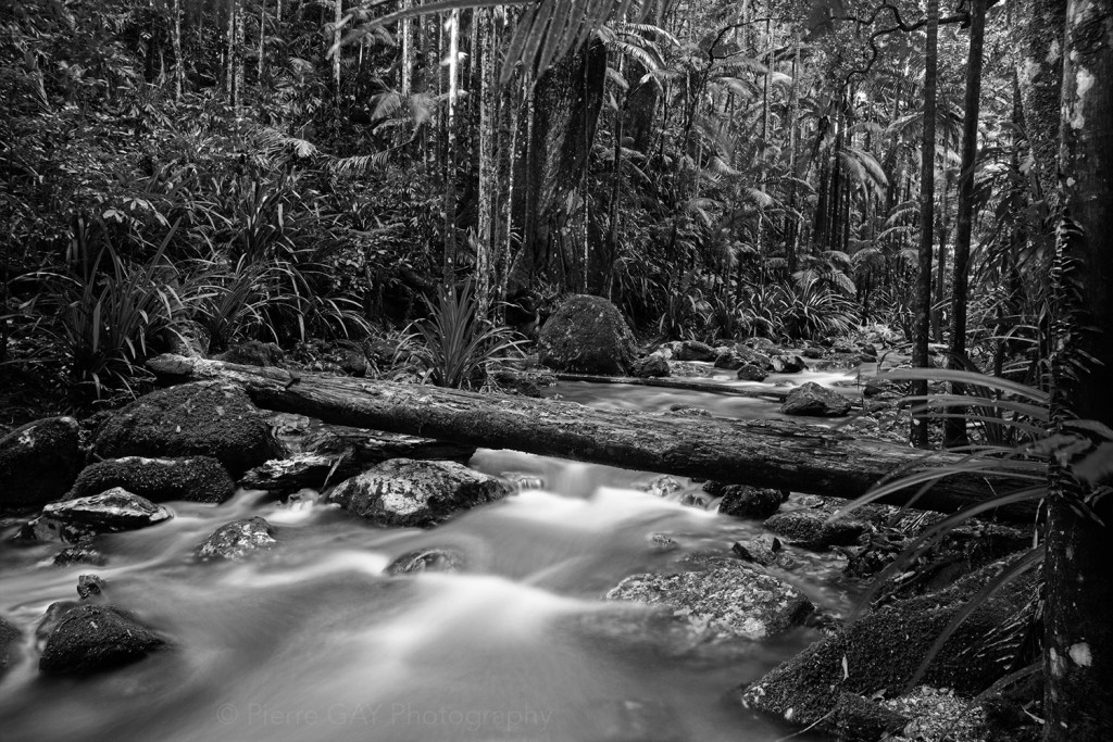 alt text Rain forest by Pierre GAY photography on perceive.world