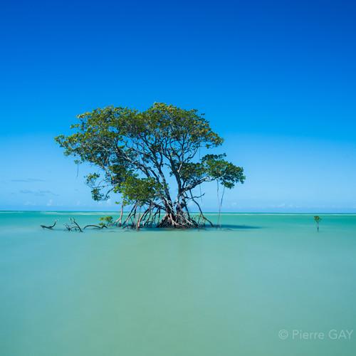treecairns
